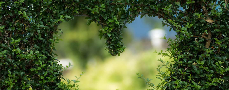 Bilde 10 - hjerte utklipt i grønn busk